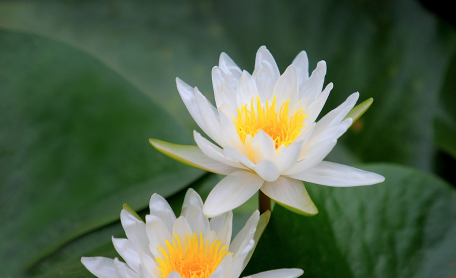 cropped-Homepage-Lotus-Cropped.jpg