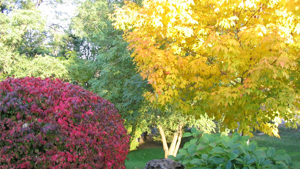**Autumn Trees - Reading